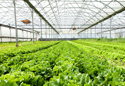 Why Reverse Osmosis System is Crucial for Farming ?